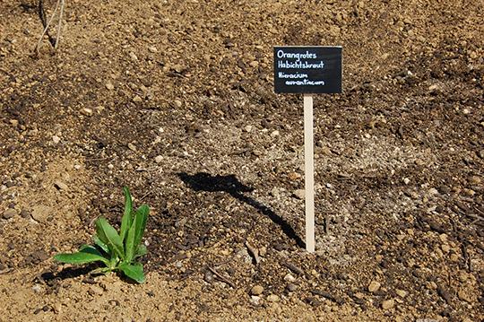 Anlegen Der Blühfläche Vor Der Bio.Garten.Eden Zentrale